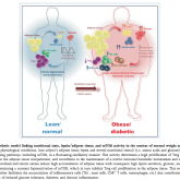 Matarese, G., Procaccini, C., & De Rosa, V. (2012). At the crossroad of T cells, adipose tissue, and diabetes. Immunological reviews, 249(1), 116–34. doi:10.1111/j.1600-065X.2012.01154.x